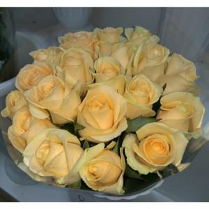 17 чайных (кремовых) роз