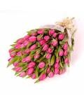18. 75 тюльпан