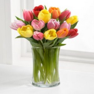 13. 31 тюльпан