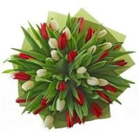051.  51 тюльпанов