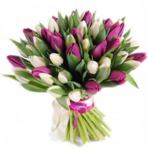 35 бело - сиреневых тюльпанов