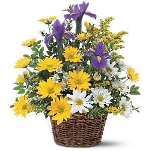 корзина хризантемы с ирисами